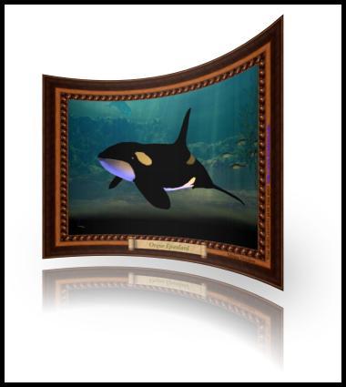 Orque épaulard dans la mer