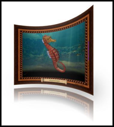 Hippocampe sous la mer
